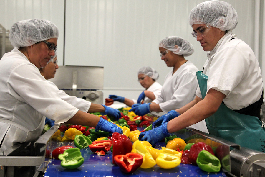 Red, yellow, and green bell peppers being processed for flame roasting